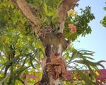 Colegiados dos cursos de Ciências Biológicas e Engenharia Ambiental realizam I Oficina de Resgate de Flora